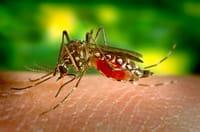 El virus zika amenaza a América Latina