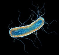 La flora intestinal se relaciona con la conducta y la memoria