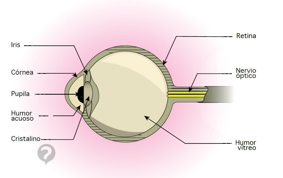 Nervio óptico - Definición