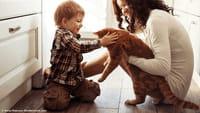 Intoxicaciones con fármacos para mascotas