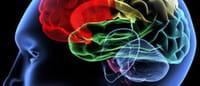 El 'chip' prodigioso: consigue registrar la actividad neuronal y liberar fármacos en el cerebro