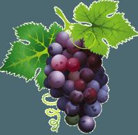 Antioxidante presente en las uvas puede ser la clave para un nuevo tratamiento contra el acné