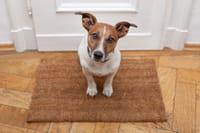 Una agencia para perros 'influencers'
