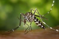 El virus chikungunya puede provocar encefalitis