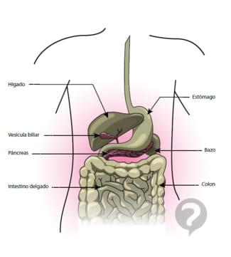 Cómo saber si la bilirrubina está alta o baja