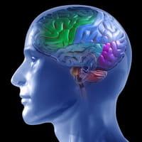 Desarrollan un tratamiento para prevenir el daño cerebral tras convulsiones prolongadas