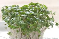 Un compuesto a base de vegetales como el brócoli o el repollo protege frente a dosis radiactivas