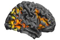La hormona del crecimiento, efectiva para recuperar la función motora tras una lesión cerebral