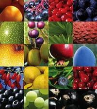 Los antioxidantes del té, las frutas y las verduras podrían combatir el cáncer de próstata