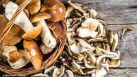 Comer setas reduce el riesgo de perder la memoria