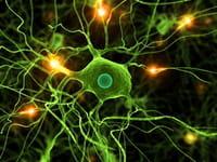 El cerebro utiliza los colores para almacenar y ordenar datos sobre objetos
