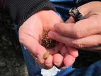 Aumenta el consumo problemático de cannabis entre los jóvenes de 14 a 18 años