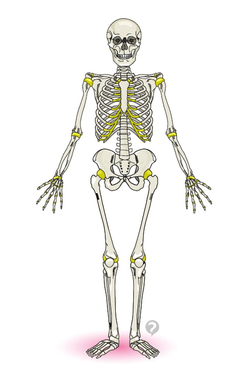 Esqueleto humano - Definición