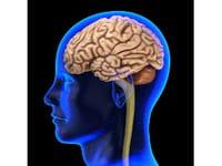 ¿Una proteína que rejuvenece el cerebro?