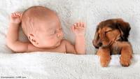 Las mascotas previenen las alergias en bebés