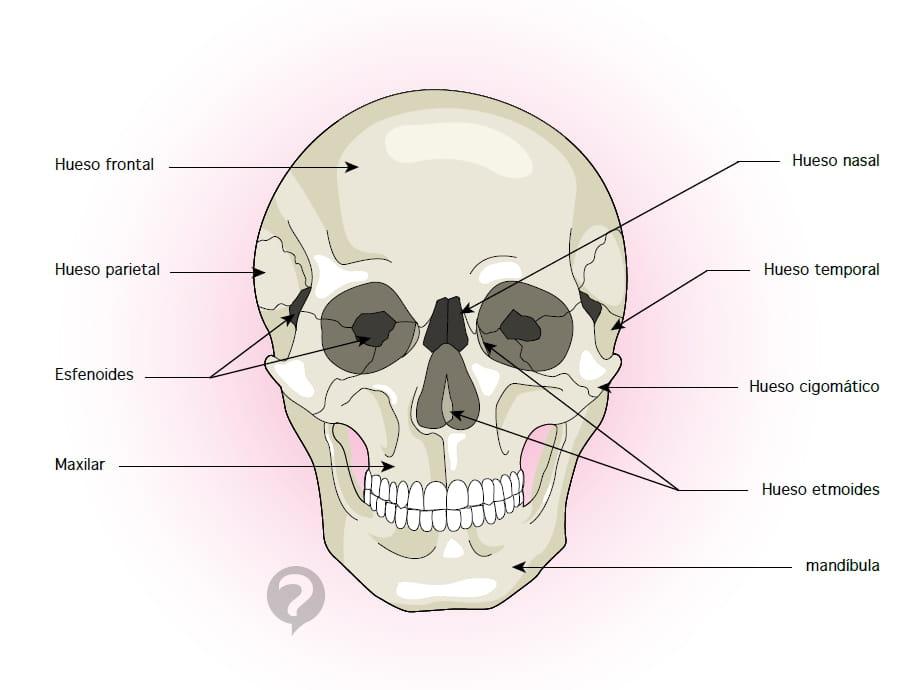 Hueso frontal - Definición