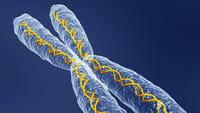 En genética, nadie es perfecto