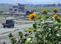 Japón se ha puesto en campaña para limpiar el aire de radioactividad y ahorrar energía luego del accidente de Fukushima.