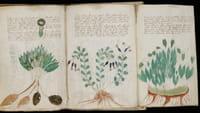 Descifrado el códice Voynich con IA