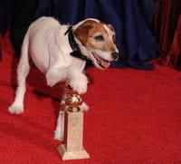 Uggie, el perro de la película \'The artist\', con el Globo de Oro
