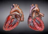 Detectan un aumento de cuadros de depresión y ansiedad en las parejas de pacientes infartados