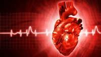 Crean músculo cardíaco con células madre