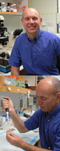 Buscaban un fármaco para combatir el cáncer y descubrieron un anticonceptivo masculino