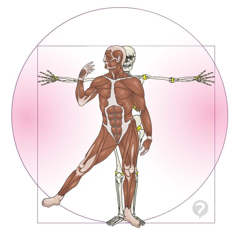 Anatomía humana - Definición